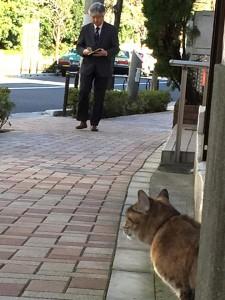 Cat fukiage3 20141209