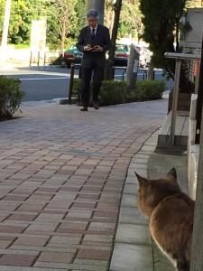 Cat fukiage4 20141209