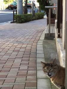Cat fukiage5 20141209