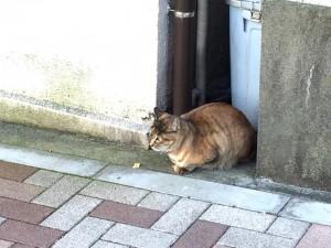 Cat fukiage6 20141209