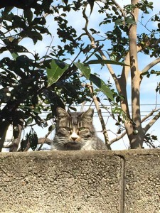 Cat overthe wall 20150228