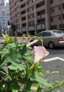 flowers2 20150725