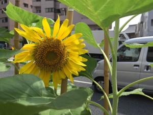 flowers3 20150725
