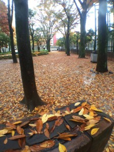 20141126otsukakubomachipark