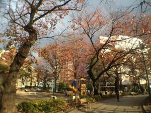20141128kaiwaiphoto3