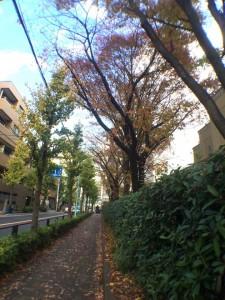 20141128kaiwaiphoto5