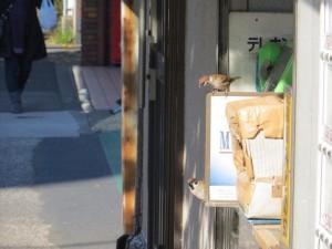 20141209sparrow13