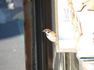 20141209sparrow8