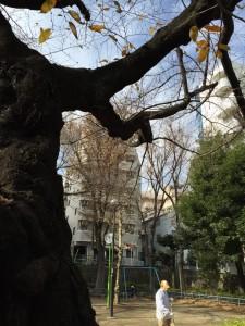 20141210ohtsukanakamachipark1