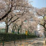 跡見と新大塚公園